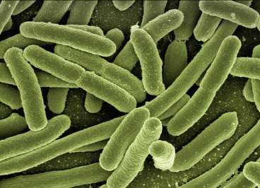 koli-bacteria-123081